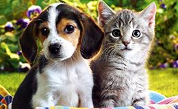 adopt1