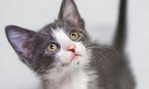 Adopt a Cat from the Parma Animal Shelter