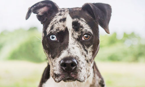 Adopt a Dog from the Parma Animal Shelter