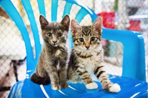 ELINOR: Kittens for sale in cleveland ohio