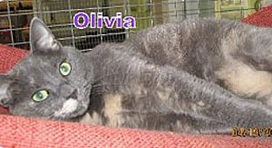 Adopt Olivia from the Parma Animal Shelter