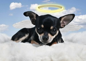 Learn about Parma Animal Shelter Volunteers Who Passed Away.