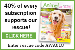 Become an On Going Partner of the Parma Animal Shelter like Animal Wellness Magazine.