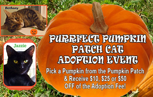 Join the Parma Animal Shelter for a Purrfect Pumpkin Patch Cat Adoption Event!