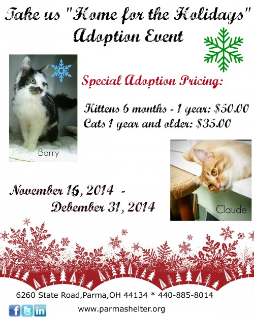 Adopt a Cat or Kitten from the Parma Animal Shelter