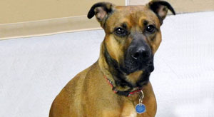 Adopt Lady from the Parma Animal Shelter.