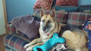 Shiloh with her toy