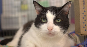 Home Parma Animal Shelter