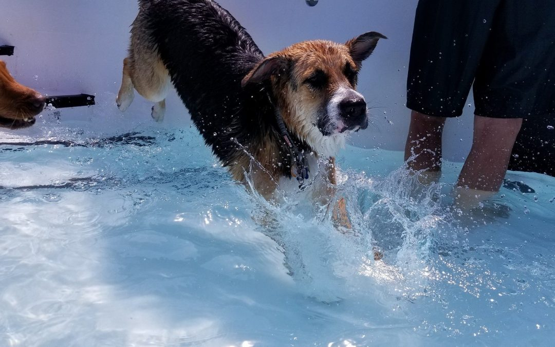 A Big Thanks to All Our Doggie Swim Participants!