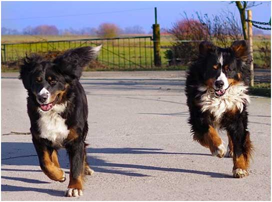 Choosing the Right Dog for You: Tips for Making an Informed Decision