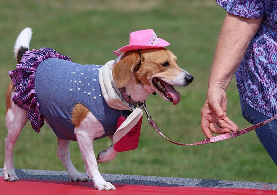 First Annual Doggie Fashion Show