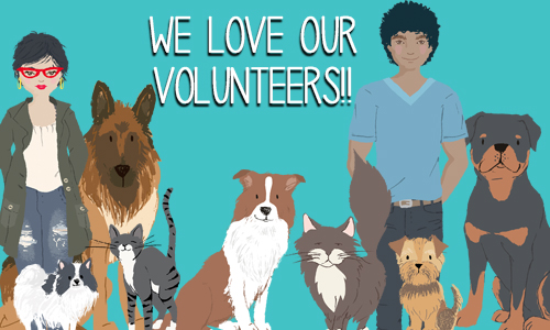 Volunteer at the Parma Animal Shelter