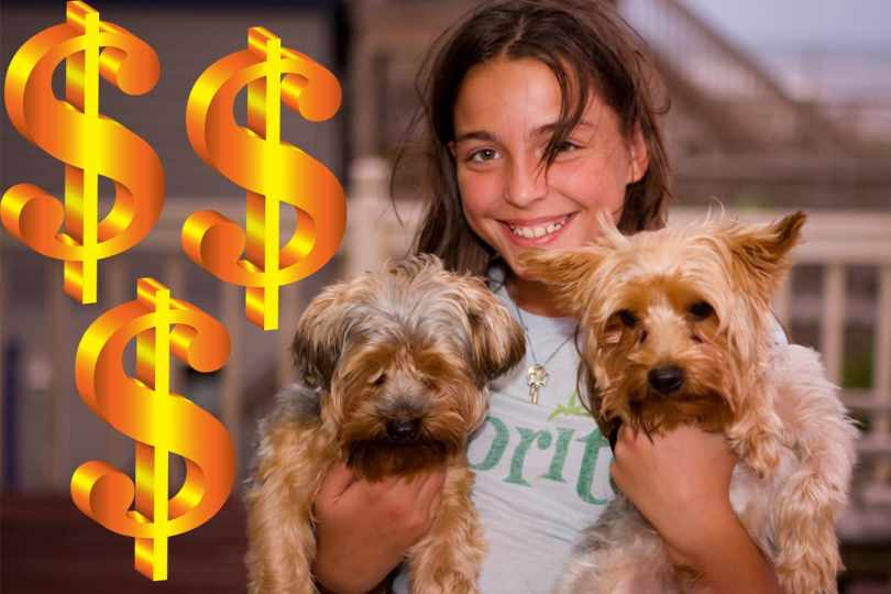 The True Cost of Having a Dog
