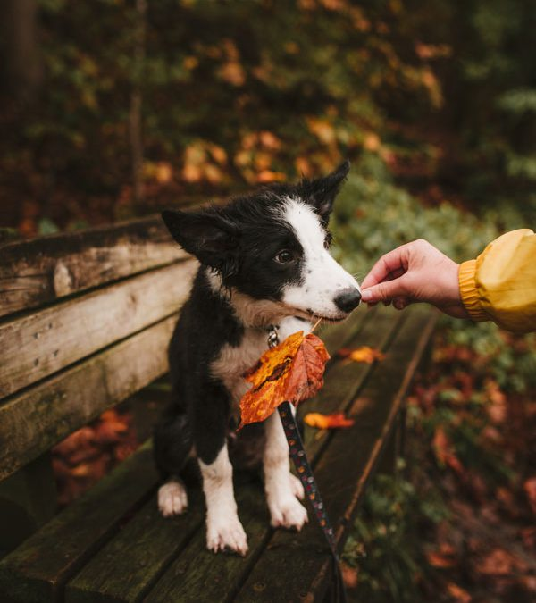 5 Ways to Prepare Your Pet for the Cooler Months Ahead